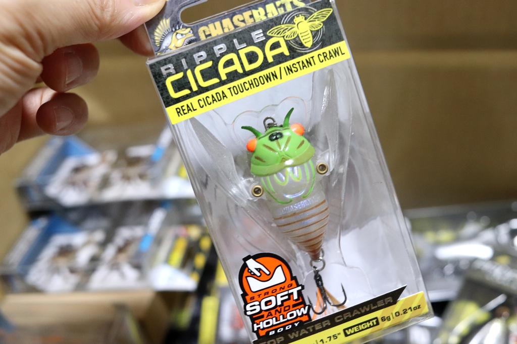 『リップル シケーダー / Ripple Cicada』